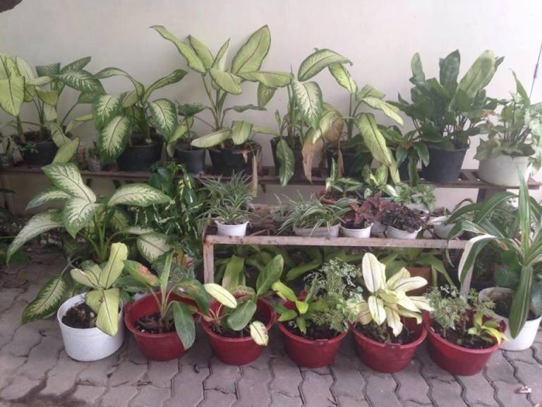 more-plants